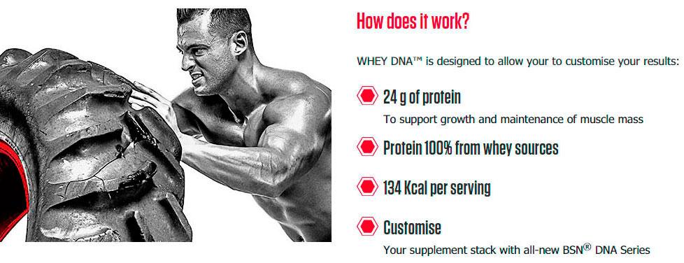 BSN-WHEY-DNA-баннер